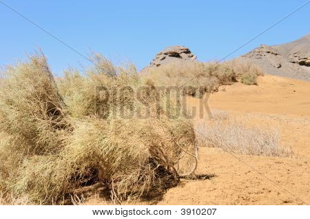 View Arabian Desert
