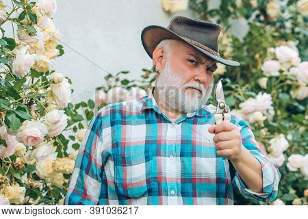 Spring And Hobbies. Gardener Cutting Flowers In His Garden. Spring And Summer. Planting Flowers. Gar