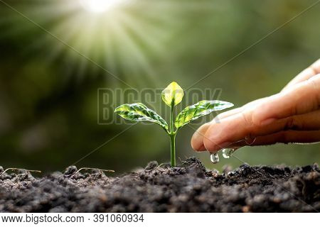 Green Trees Growing On The Ground And Agriculture Hands That Water The Trees, Concept Of Growing Tre