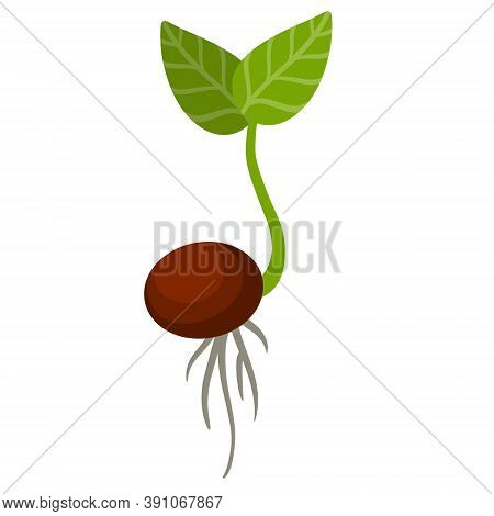 Sprout Of Plant. Small Green Leaves. Sprouted Seed. Farm And Gardening.
