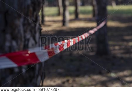 Pine Wood And Red Warning Tape. Warning Tape Is Stretched Around The Trees. Prohibition Of Visiting