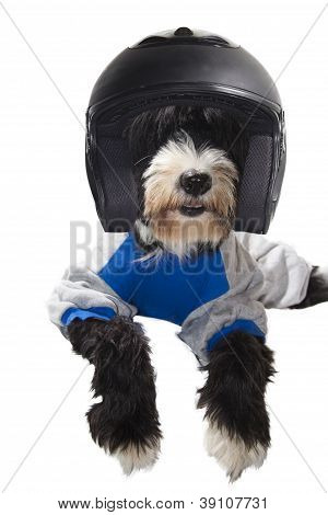 Race Driver Dog