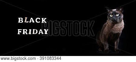 Cat On Black Background.  Black Friday.