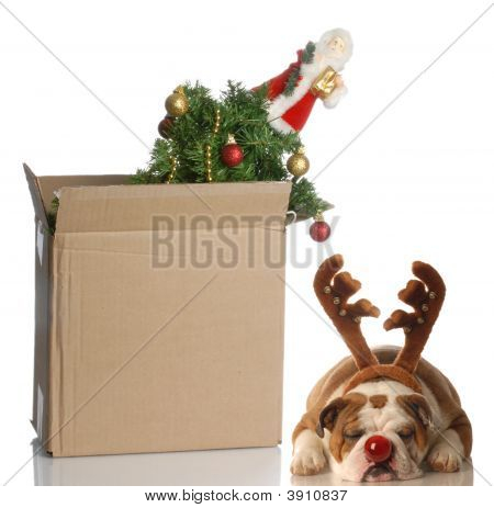 christmas tree packed up in box with dog dressed up as sleeping beside it poster
