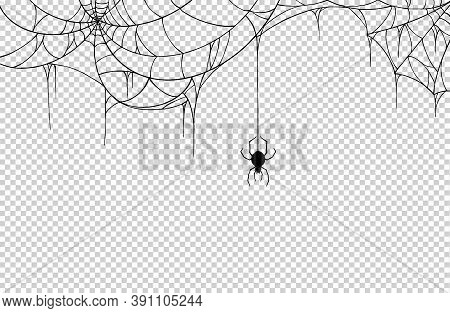 Spider  Hanging From Spiderwebs Isolate On Png Or Transparent  Background, Graphic Resources, Vector