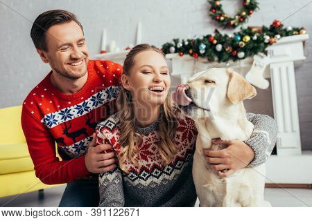 Woman In Knitted Sweater Hugging Labrador Near Husband In Decorated Apartment On Christmas
