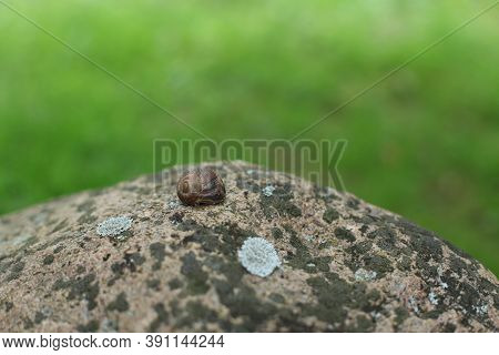 Snails : Polymita Picta Or Cuban Snails One Of Most Colorful And Beautiful Land Snails In The Wolrd