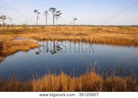 Bog In Sunny Autumn Day