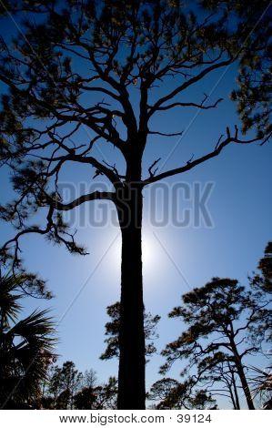 Back Lighted Tree