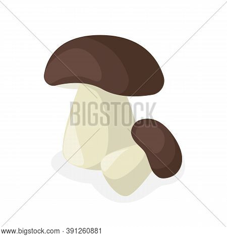 Porcini Mushrooms Are Edible. Organic Product. Relistic On A White Background. It Can Be Used As A L