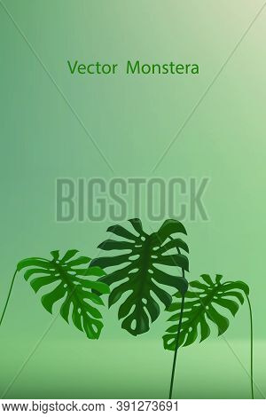 Tropical Ornamental Plant Called Monstera On A Gradient Navy Green Backdrop. Illustration Monstera P