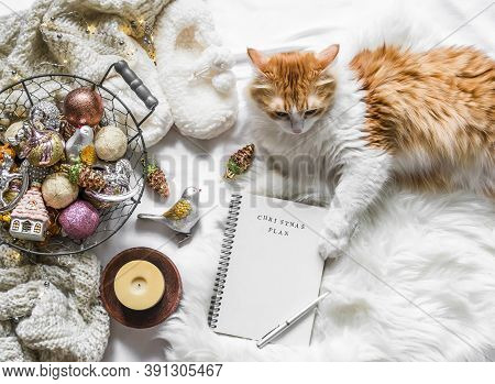 Christmas Background. Red Cat, Christmas Decorations, Empty Notepad Christmas Planning On A Fluffy C