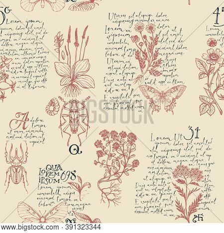 Seamless Pattern With Handwritten Text Lorem Ipsum, Medicinal Herbs And Insects. Vector Hand-drawn H