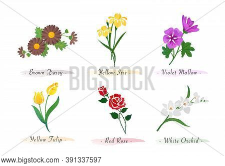 Watercolor Botanic Garden Nature Plant Flower Daisy Iris Violet Mallow Tulip Rose Orchid