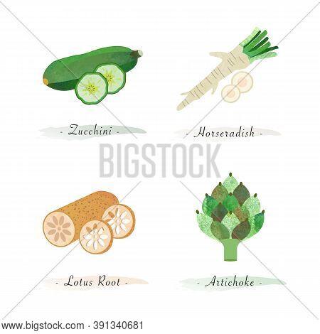 Watercolor Healthy Nature Organic Plant Vegetable Food Ingredient Zucchini Horseradish Lotus Root Ar