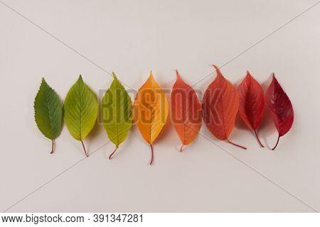 Autumn Leaves Rainbow Color Gradient. Autumn Season Change Concept.