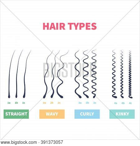 Detailed Hair Types Chart Set Of Strands Growth Patterns