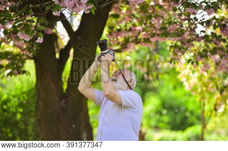 Express Positivity. Cherry Blossoming Garden. Photographer Taking Photos Of Famous Cherry Blossoms.