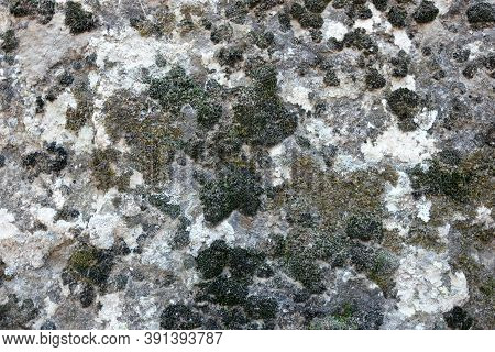 Rock Fungus Texture. Moss Fungus And Lichen Covered Stone, Close Up View. Nature Background.