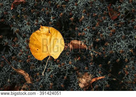Single, Yellow Leaf Fallen On Dry Flowers. Autumn Vibes