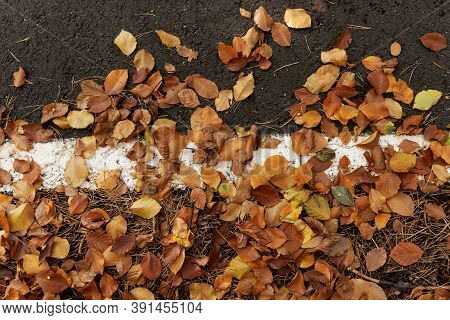 Fallen Colorful Leaves On The Sidelines Of The Asphalt Road. Natural Autumn Background
