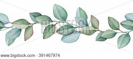 Seamless Eucalyptus Border Watercolor Illustration. Natural Organic Herb In Elegant Ornament. Hand D