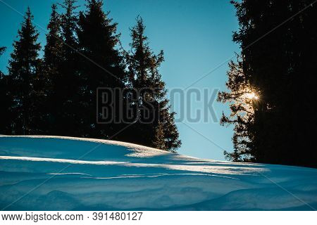 Green Spruce Against The Background Of Snowy Mountains Sunrise. Tian-shan Alatau Mountains Landscape