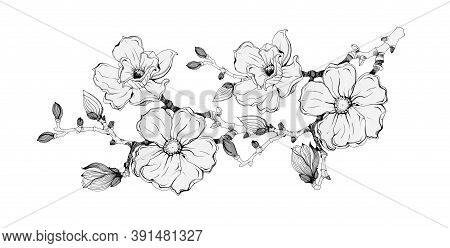 Magnolia Tree Branch With Flowers And Buds Black Ink Illustration. Hand Drawn Graphic Spring Beautif