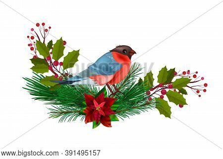 Winter Christmas Floral Illustration With Red Bullfinch, Fir Branches, Holly Isolated On White. Holi