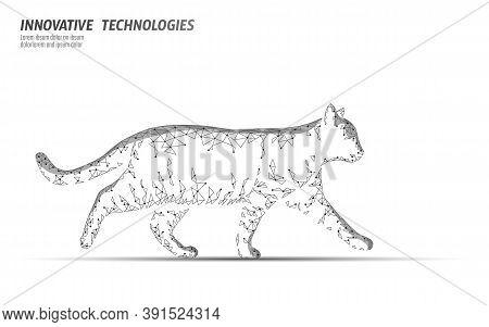 Cat Silhouette Veterinary Clinic Banner Template. White Vet Care Medical Help. Vet Hospital Doctor O