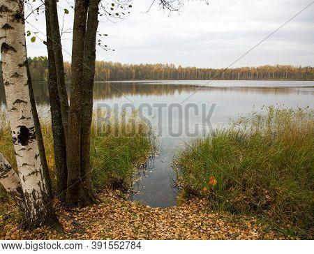 Golden Autumn On Lake Svetloyar In The Nizhny Novgorod Region