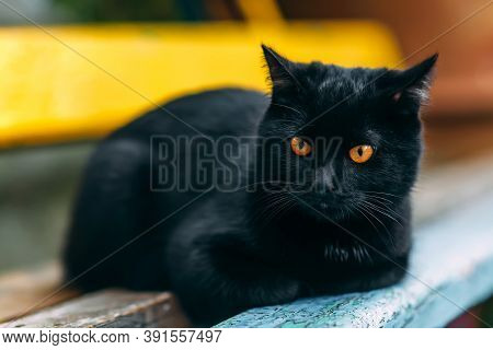 Homeless Grimy Black Cat. A Beautiful Black Cat With Yellow Eyes.