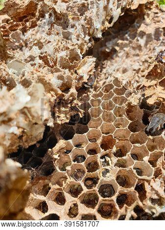 Macro Photography - Closeup Shot Of Abandoned Beehive, Photo Of Dried Beehive, Honey Bee House, Aban