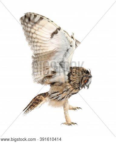 Beautiful Eagle Owl Flying On White Background. Predatory Bird