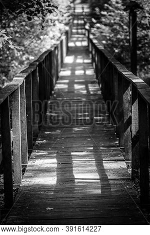 Wooden Footpath Leads Through Bushes And Swampland In The Forest
