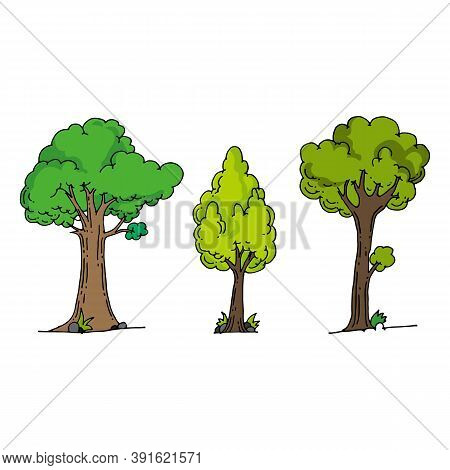 Forest Trees. Green Fir Tree, Forests Pine Composition And Isolated Trees. Foresting Botanical Woodl