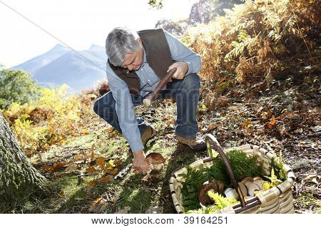 Senior man knelt in forest looking for ceps
