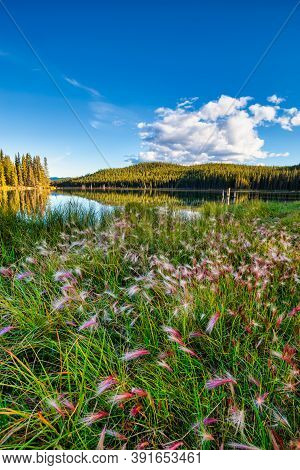 Beautiful Scenery With Wild Flowers By The Lake During A Clear Sunny Evening In Canadian Nature. Tak
