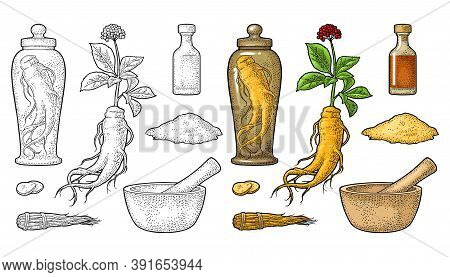 Set Panax Ginseng. Root, Slice, Bunch Tied By Rope, Leaves, Mortar, Pestle, Glass Bottle Of Tincture