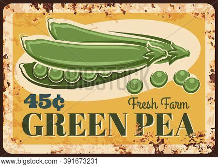 Green Pea Vegetables Rusty Metal Plate Price, Farm Market Food, Vector Vintage Poster. Natural Organ