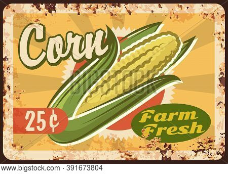 Corn Rusty Metal Plate, Vector Fresh Farm Product Vintage Rust Tin Sign. Eco Market Vegetable Produc
