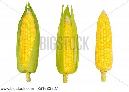 Corncobs Or Fresh Corn Ears Isolated On White Background As Package Design Element