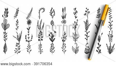 Wild Plants Doodle Set. Collection Of Pencil Pen Hand Drawn Sketche Template Pattern Of Herbal Garde
