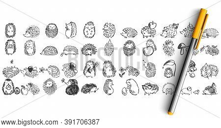 Hedgehogs Doolde Set. Collection Of Pencil Pen Ink Hand Drawn Sketches Templates Patterns Of Forest