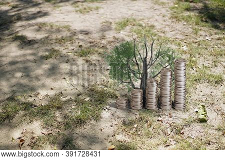 Money Saving Growing Business Finance. Plant Growing In Savings Coins - Investment And Interest Conc