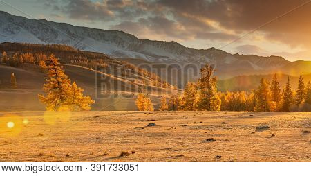 Beautiful Panorama Of A Valley Full Of Golden Trees In The Foreground And White Snowy Mountains In T