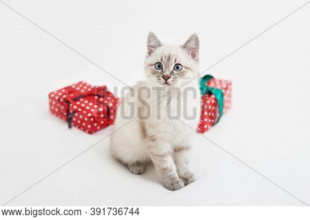 Christmas Kitten With Gifts. Merry Christmas Greeting Card. New Year Gift For Child. Winter Holidays