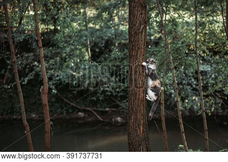 Calico Cat Climbing On The Tree In The Park. Copy Space