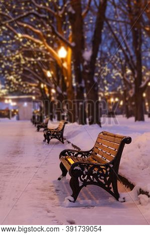 Winter Evening Park Landscape. Wooden Bench, Snow Covered Trees.