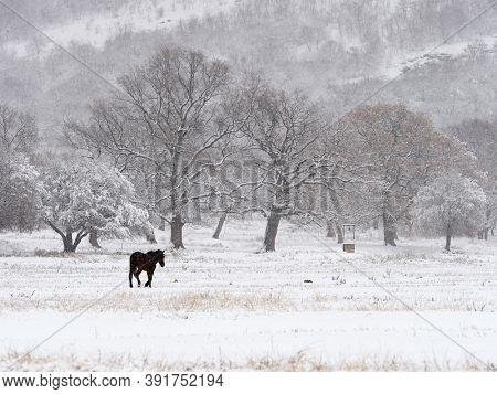 beautiful winter landscape on harsh weather, Dobrogea, Romania - lonely horse on field